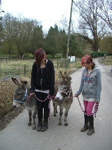 [Walking the donkeys]